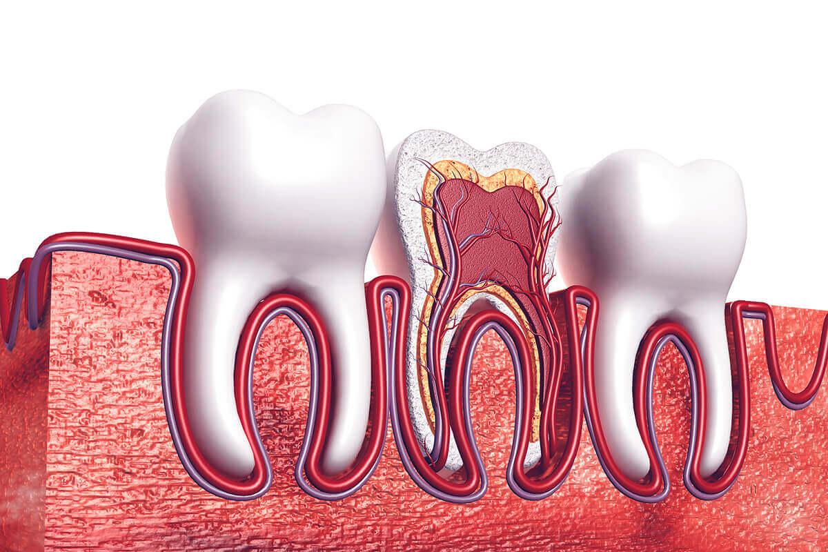 Root Canals | Dentist - Norristown & Conshohocken, PA